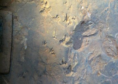 Lark Quarry - big foot print scattering the small fry