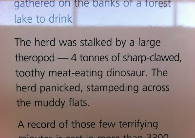 Lark Quarry - story of the dinosaur stampede